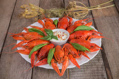 Red boiled crayfish and herbs with white sauce Royalty Free Stock Photography