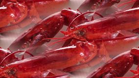 Red boiled crayfish lying on the table royalty free stock photo