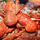 Red boiled crayfish on plate Stock Image