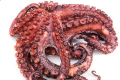 Red boiled octopus closeup. Stock Photography