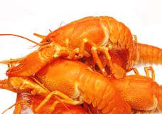 Red boiled river lobster Stock Image