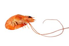 Red Boiled Shrimp. Isolated on white. Stock Photography