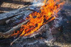 Red Bonfire in the forest in spring royalty free stock photos