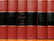 Red Books on Shelf. Row of old red leather books on a shelf with blank covers Royalty Free Stock Photo