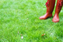 Red boots and wet grass Royalty Free Stock Image