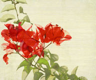 Red Bougainvillea Branch on Bamboo Background Stock Photos
