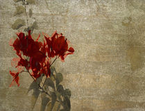 Red bougainvillea on cloudy plaster. Red bougainvillea on textured cloudy plaster background stock photography