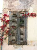 Red Bougainvillea Growing Across Wooden Window Shutters, Plaka, Athens, Greece. An historic original house in the Plaka Precinct, Athens, Greece, with red royalty free stock images