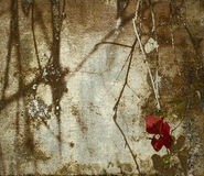 Red bougainvillea and shadowy branchesl. Dark shadowy bougainvillea and branches on grunge wall background royalty free stock images