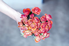 Red  bouquet of blooming roses in man hand Royalty Free Stock Photography