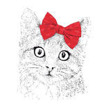 Сat with a red bow. Realistic graphic illustration Royalty Free Stock Photography