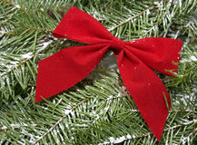 Red bow on snow covered evergreen Christmas tree Stock Photos