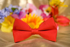Red bow tie Stock Photos