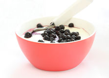 Red bowl with children pap / mush with blueberries Stock Photography
