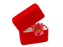 Red box ,lily holiday Stock Images