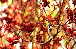 Red, Branch, Autumn, Leaf Royalty Free Stock Image