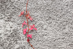 Red branch. Stock Images