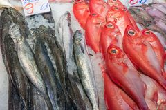 Red bream and other fish for sale Stock Image