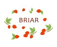 The red briar Royalty Free Stock Images