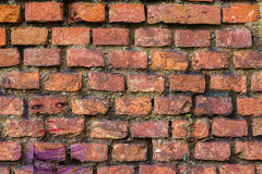 Red brick. Texture with plant Stock Photos