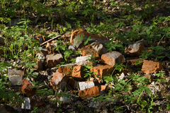 Red brick on the grass Royalty Free Stock Photography