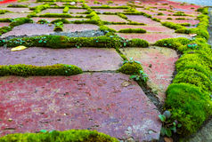 Red Brick with Green Moss Royalty Free Stock Photography