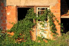 Red brick house abandoned during construction with broken window and destroyed front wooden doors covered with crawler plant. Red brick house abandoned during stock photography