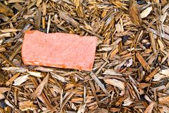 Red Brick in Mulch Stock Photo