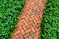 Red brick pathway in the garden royalty free stock photography