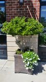 Potted shrubs and flowers outside brick storefront Stock Photos