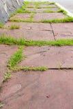 The red brick walkway. In garden Stock Images