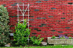 Red brick wall at back yard with green plants at home building decorated with tree, rocks, bushes and flower pot. Stock Images