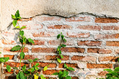 Red brick wall background with tree Royalty Free Stock Photography