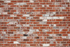Red brick wall background. Whitewashed red brick texture background Stock Photos