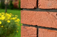Red brick wall in the foreground. And yellow flower in background Royalty Free Stock Image