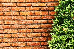 Red brick wall in front of a green bush. Close-up stock photos