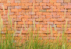 Red brick wall with front green grass. For background Stock Image