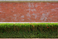 Red Brick Wall with Green Bush Stock Image