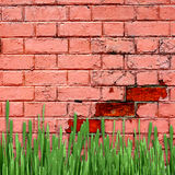 Red brick wall with green grass Royalty Free Stock Photos
