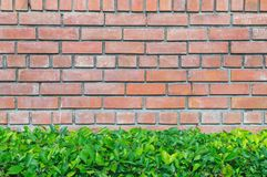 Red brick wall and green plant Royalty Free Stock Images