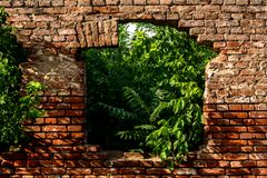 Red brick wall with old ruin window on house and green plants inside home. Red brick wall with old ruin window on house and green wild plants and flora inside royalty free stock image