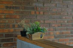 Red brick wall. And pot flowers Royalty Free Stock Image