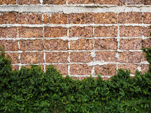 Red brick walls large blocks of Velcro grass clinging to the wal. Ls Royalty Free Stock Photos