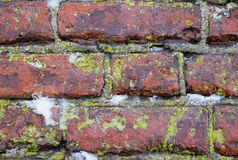 Free Red Bricks Royalty Free Stock Photography - 49634487