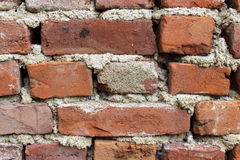 Red bricks new mostra Royalty Free Stock Photography