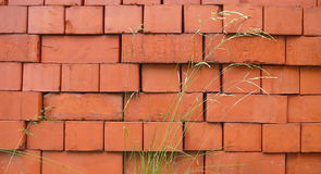 Red bricks stack and sedge. Bush Stock Images