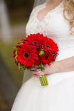 Red bridal bouquet in the hands of. Red  bridal bouquet whith camomile in her hands Royalty Free Stock Photos