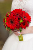 Red bridal bouquet in the hands of. Red  bridal bouquet whith camomile in her hands Royalty Free Stock Images