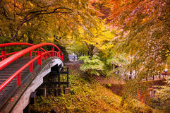 Red Bridge in Ikaho Onsen, Gunma, Japan. Red Bridge and autumn forest in Ikaho Onsen, Gunma, Japan Stock Images