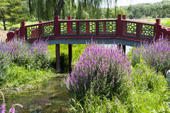 Red bridge, beautiful Lythrum salicaria Stock Photography